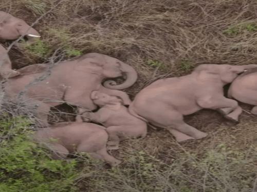 Amazing | Interesting Elephant Travel